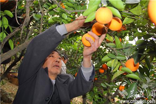 海升果汁(00359.HK)附属拟出售蒙自海升现代农业全部股权