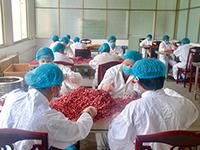 花木兰故里商丘虞城着力打造玫瑰第一品牌脱贫