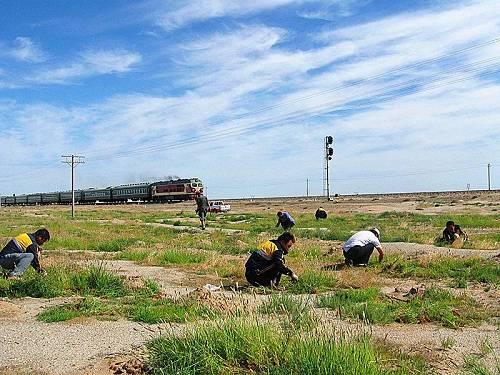 """对沙害严重地段采取设置尼龙网格沙障、栽植高立式沙障、黏土覆盖稳固沙源等措施,形成封沙育草带、前沿阻沙带、固沙防火带、防护造林带""""四带一体""""的防风固沙科学防护体系。"""