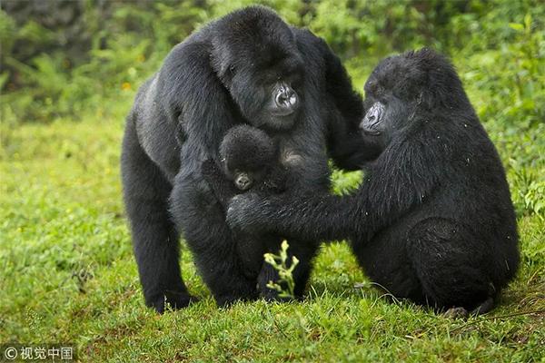"""时小刻非洲游丨卢旺达:赤道以南的""""千丘之国"""""""