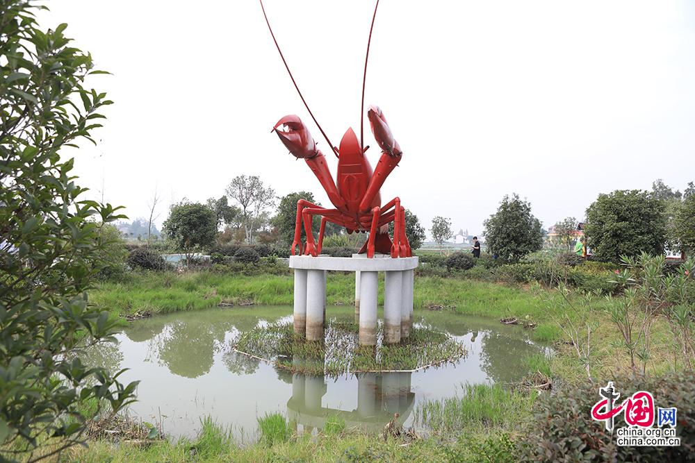 """在望城区乔口镇盘龙岭村,""""荷虾种养结合""""的绿色生态模式融合经济效益和观赏价值。中国网记者 伦晓璇 摄"""