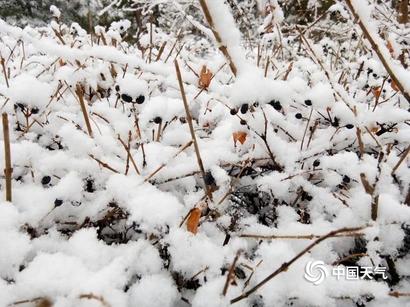 内蒙古多地出现降雪 局地暴雪