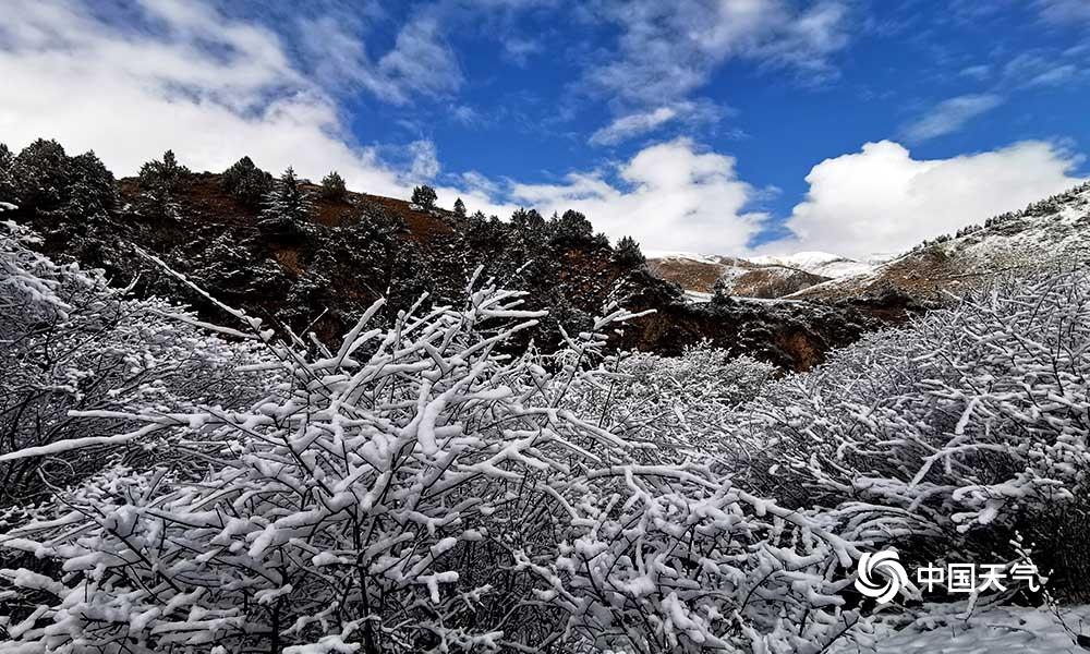 青海班玛红军沟雪后现雪淞美景