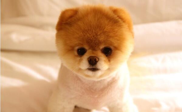 生态级的保险服务,白熊保进驻宠物保险市场!