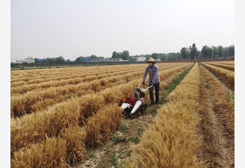 夏粮收获九成,丰收已成定局,小麦亩产预计平均提高4公斤