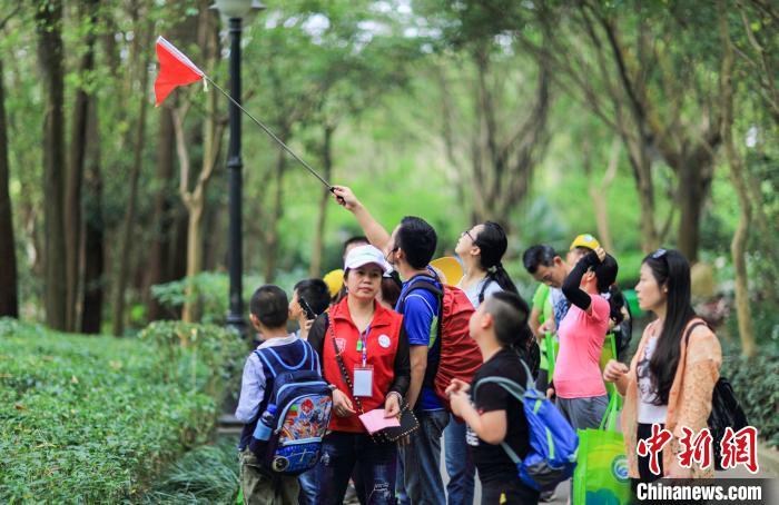"""树下也能淘""""真金"""" 广东开辟林业扶贫致富路"""
