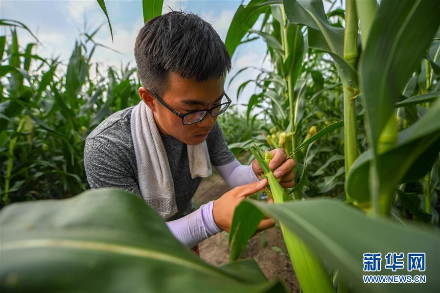 为现代农业探新路――来自吉林梨树的田野报告