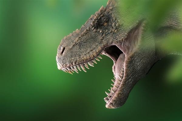 """福建发现""""恐龙舞池"""":200多枚足迹挤在一起"""