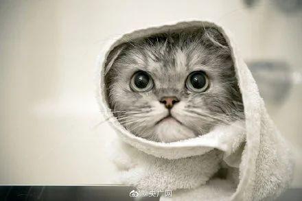 五一假期猫房间价格赶上人宾馆,宠物经济将达6000亿!