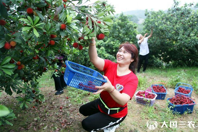 浙江台州:绿水青山杨梅红