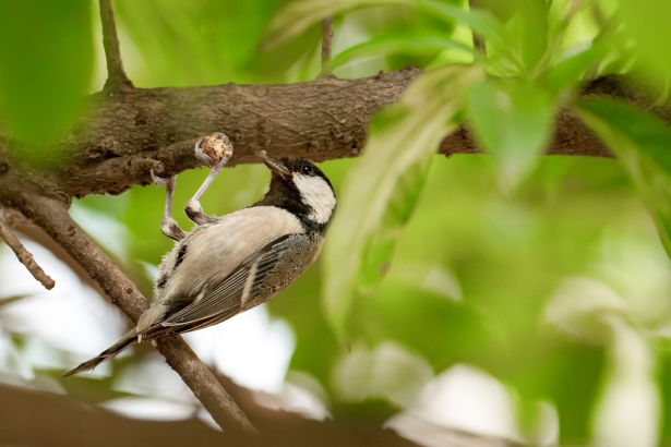 800mm焦距下的野鸟之美