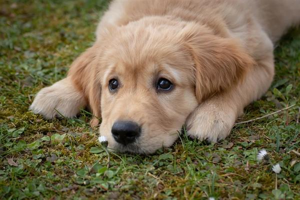 狗狗身体不适自己找草药吃后神奇痊愈 网友:这狗学过中医吧