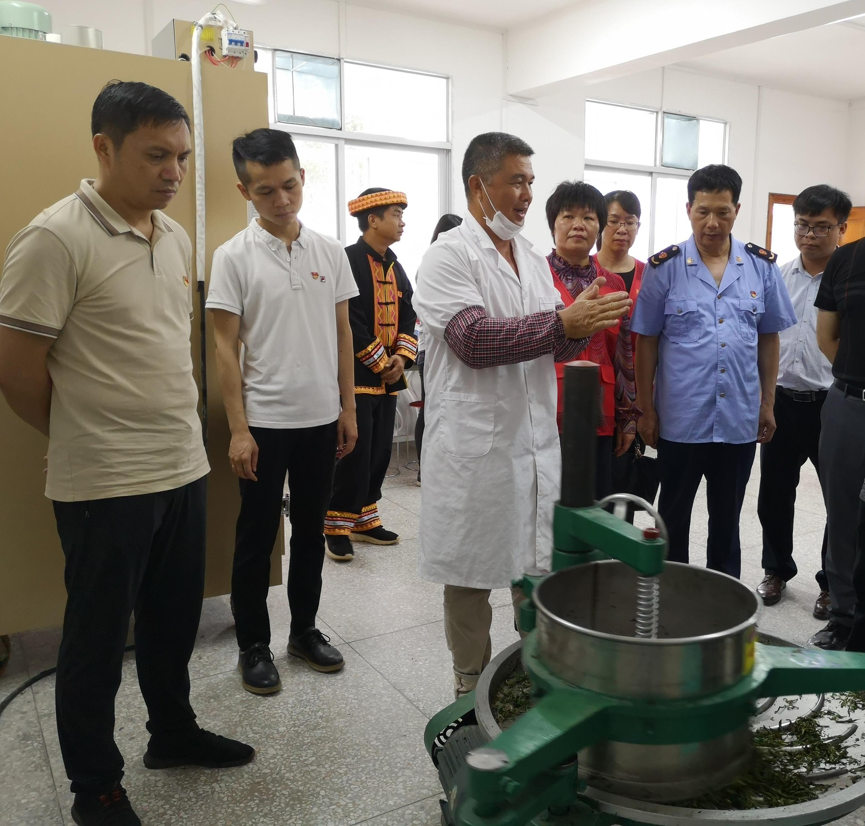 广西梧州:瑶乡飘茶香 乡亲奔小康