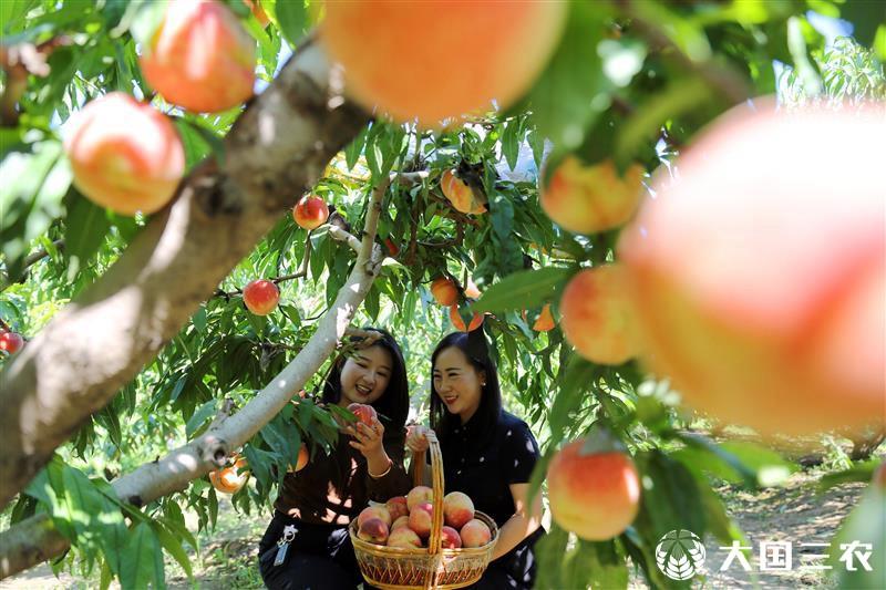山东东营:发展特色种植 四季瓜果飘香
