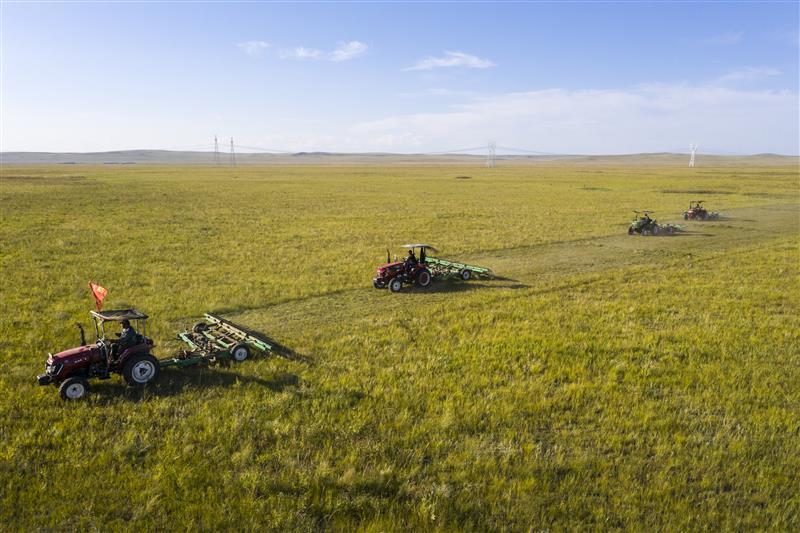 锡林郭勒草原上牧民打草忙