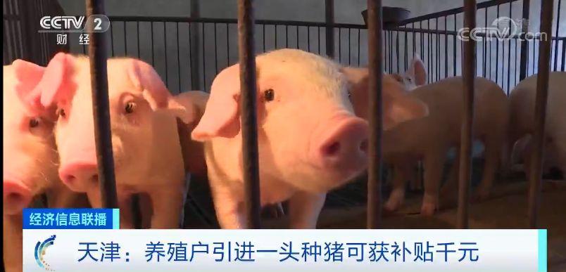 """猪肉价格啥时候""""稳住""""?专家说了一个时间点"""